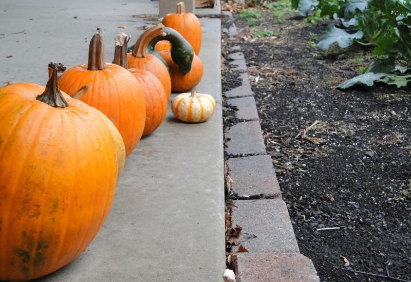 Pumpkin Row