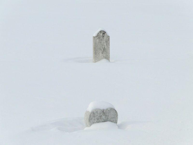 Snowy Companions