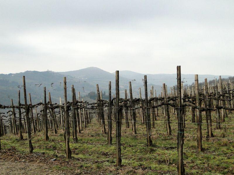 Tuscan Vines